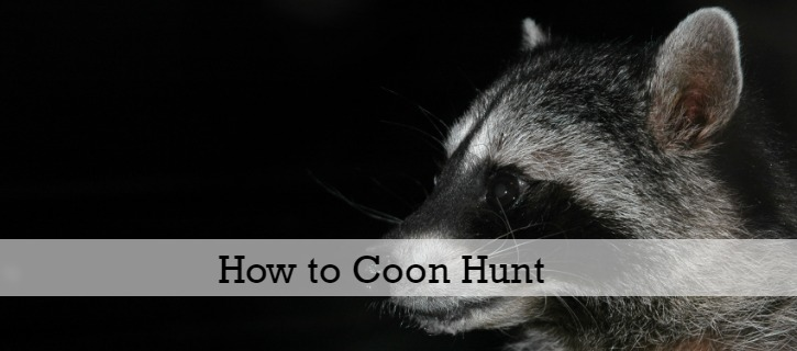 Here is a start to finish outline of how to coon hunt, covering the anatomy of a hunt and all of the steps involved. If it's all new to you, start here!